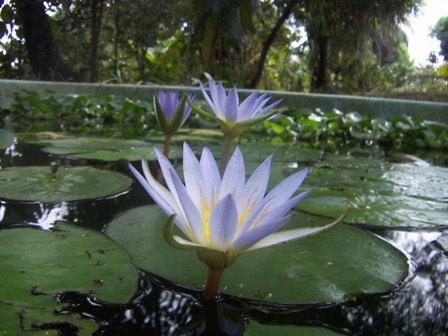 Sutra de Lotus