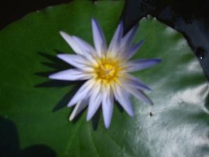 O Bodhisattva Som Maravilhoso