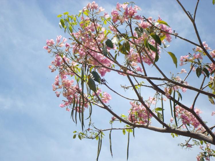 Flor e Semente